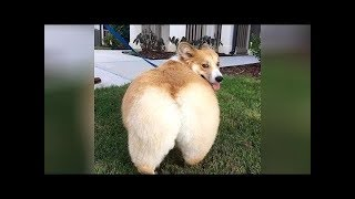 Versuche Nicht Zu Lachen Tiere 2019 Www Katze24 Com