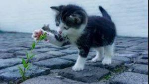 Katze Klingelton