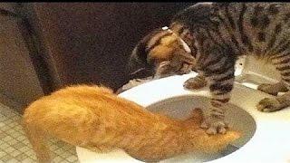 Lustige Katzen 06 Versuche Nicht Zu Lachen Oder Zu