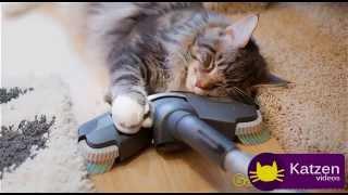 Lustige Videos Mit Katzen